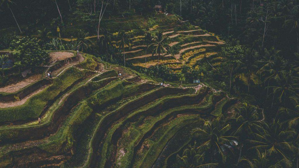 itinerario bali terrazze di riso ubud